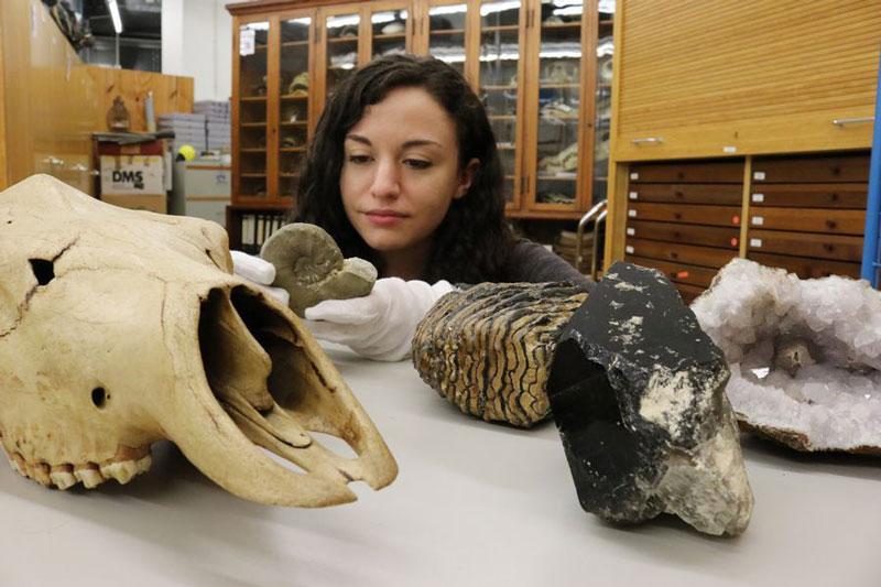 Die geowissenschaftliche Präparatorin Denise Seimet bestimmt Gesteine und Fossilien. (Foto: Aquazoo Löbbecke Museum)