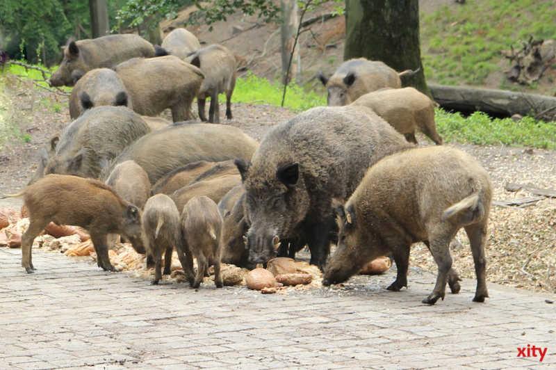 Waldfrüchte für die Tiere im Wildpark. (Foto: xity)