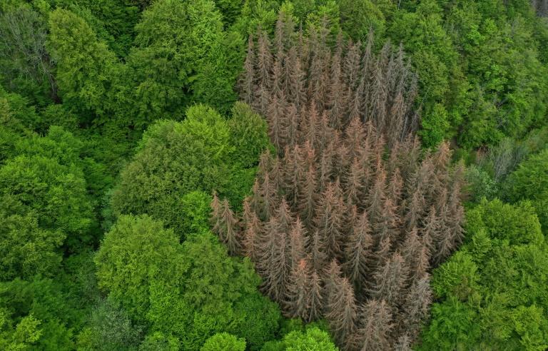 Deutsche Wälder absorbieren drei Prozent der jährlichen CO2-Emissionen (© 2021 AFP)